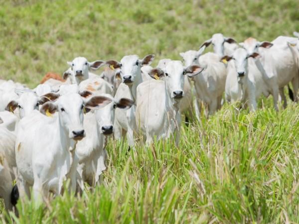 Agropecuária lidera criação de empregos no mês de julho em Goiás